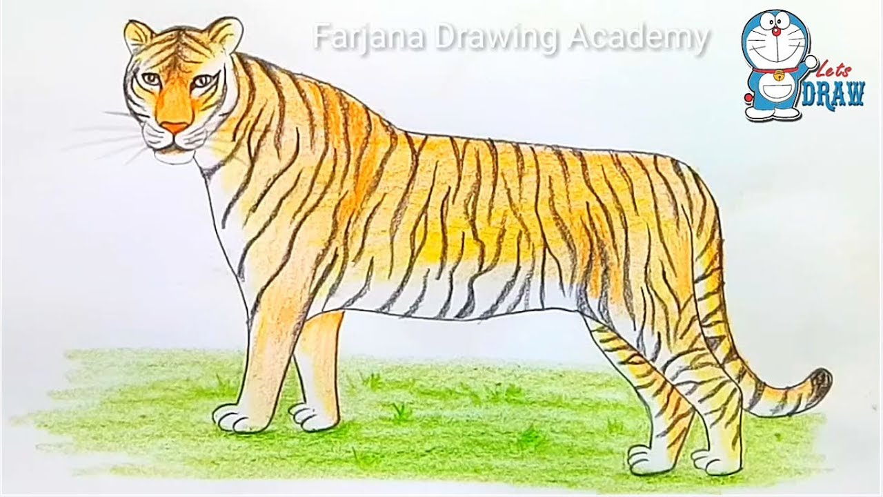 clip Drawing tiger. How to draw a