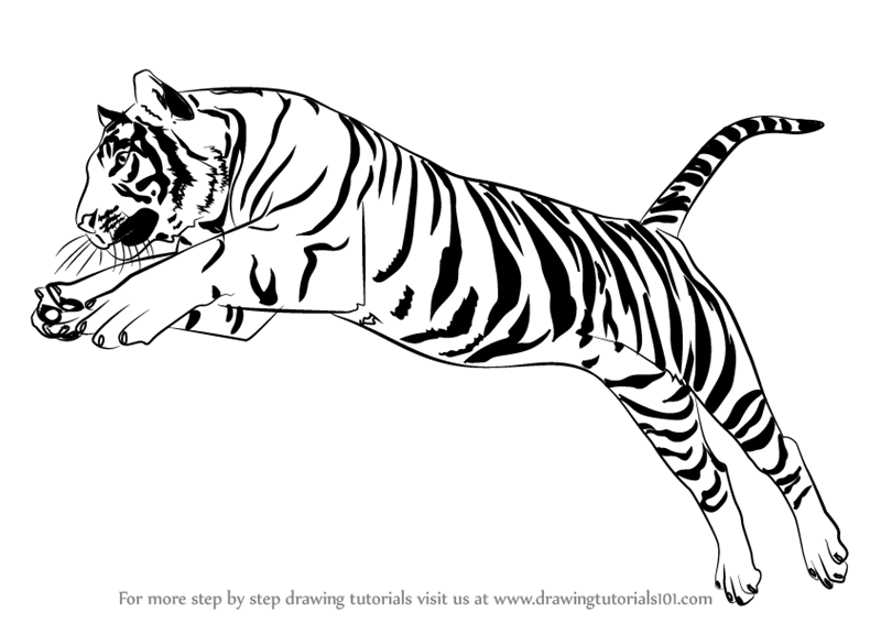 clipart black and white library Learn how to draw. Drawing tiger