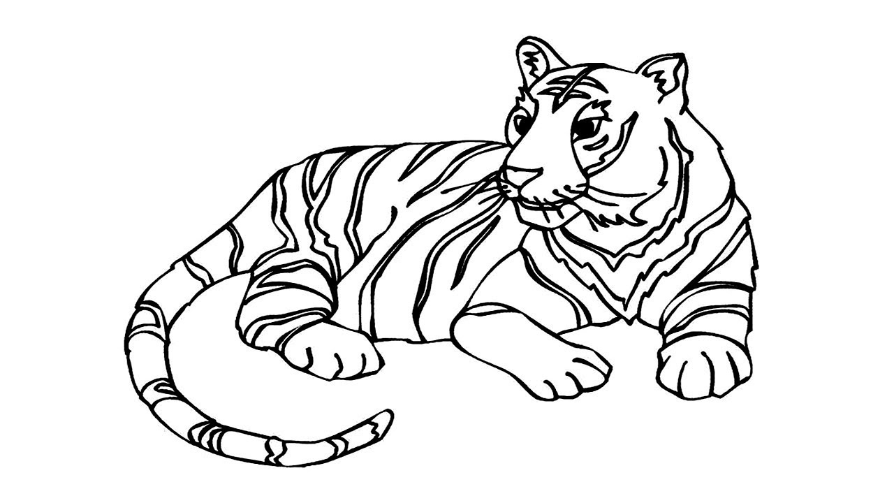 clip transparent Coloring pages how to. Drawing tiger