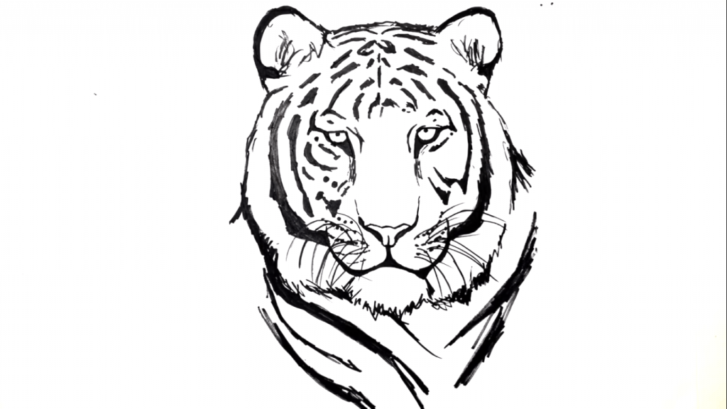 clip library stock Drawing tiger. How to draw a