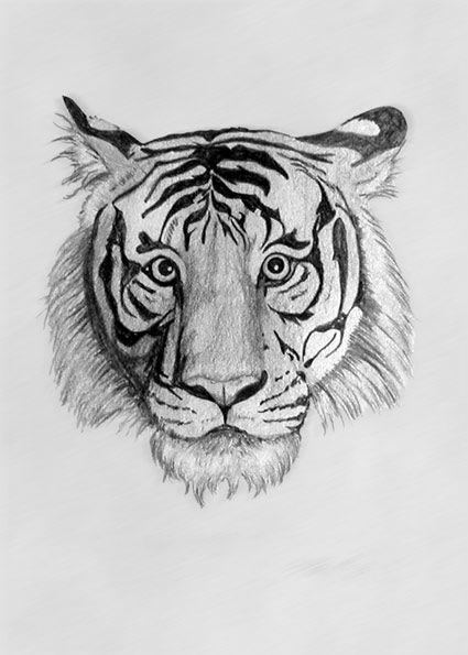 picture transparent download Pencil drawing of tiger by S