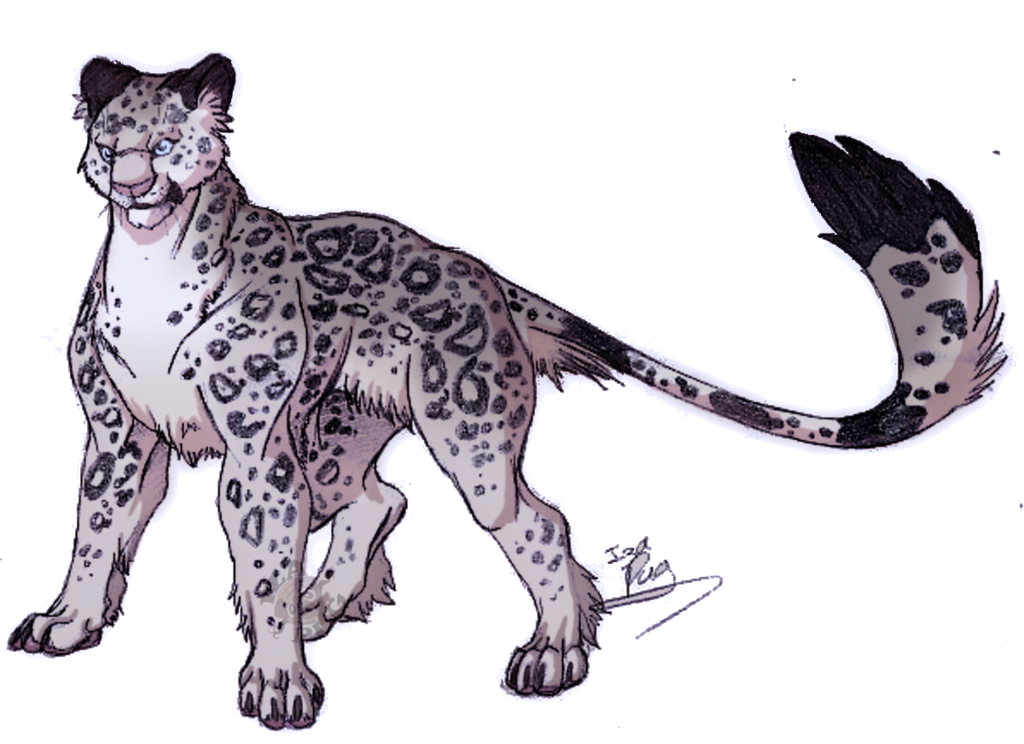 vector black and white library Snow Leopard by IzaPug on DeviantArt