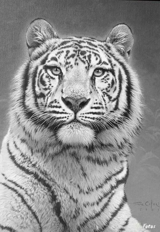 clip art royalty free library Tiger Cat Coloring pages colouring adult detailed advanced
