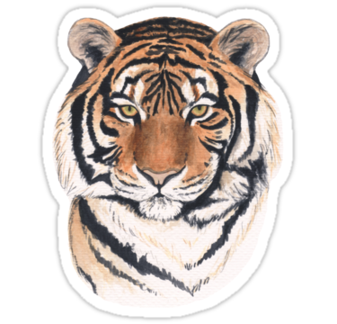 vector royalty free library drawing tiger pastel #95741579
