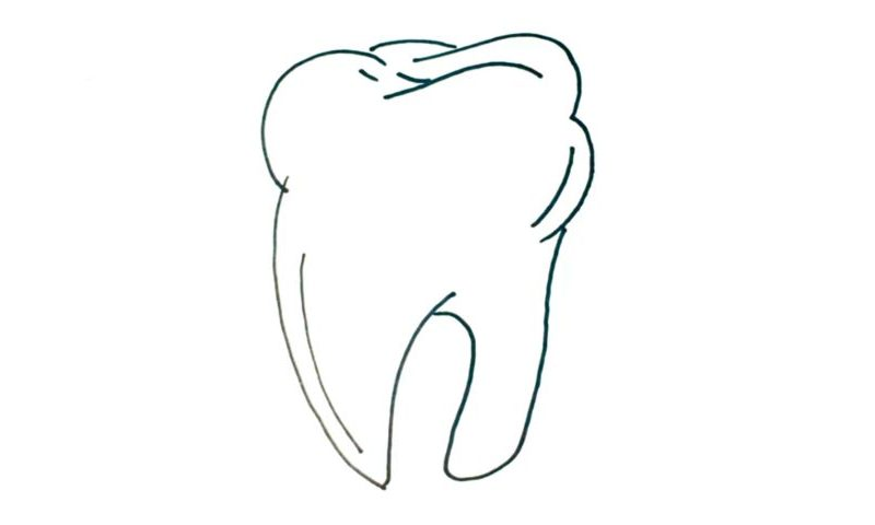 clip art royalty free stock Drawing tooth. How to draw a