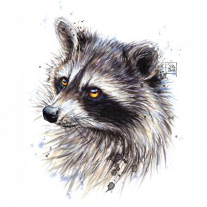 picture transparent  raccoon for free. Drawing topic pencil