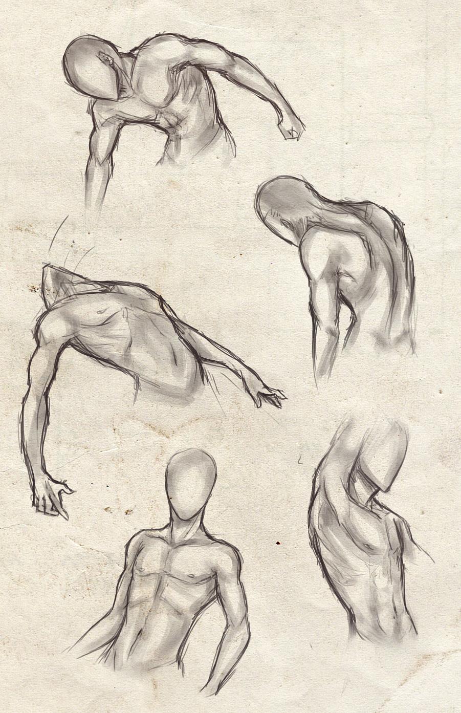 graphic transparent stock Drawing torso. Pin by sarafina lamantia.