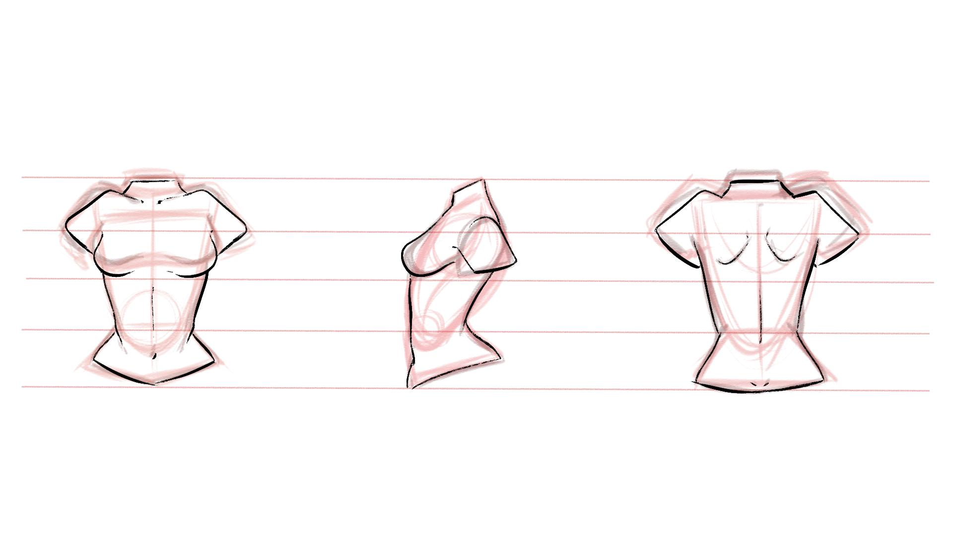 svg free download Drawing torso. How to draw the.
