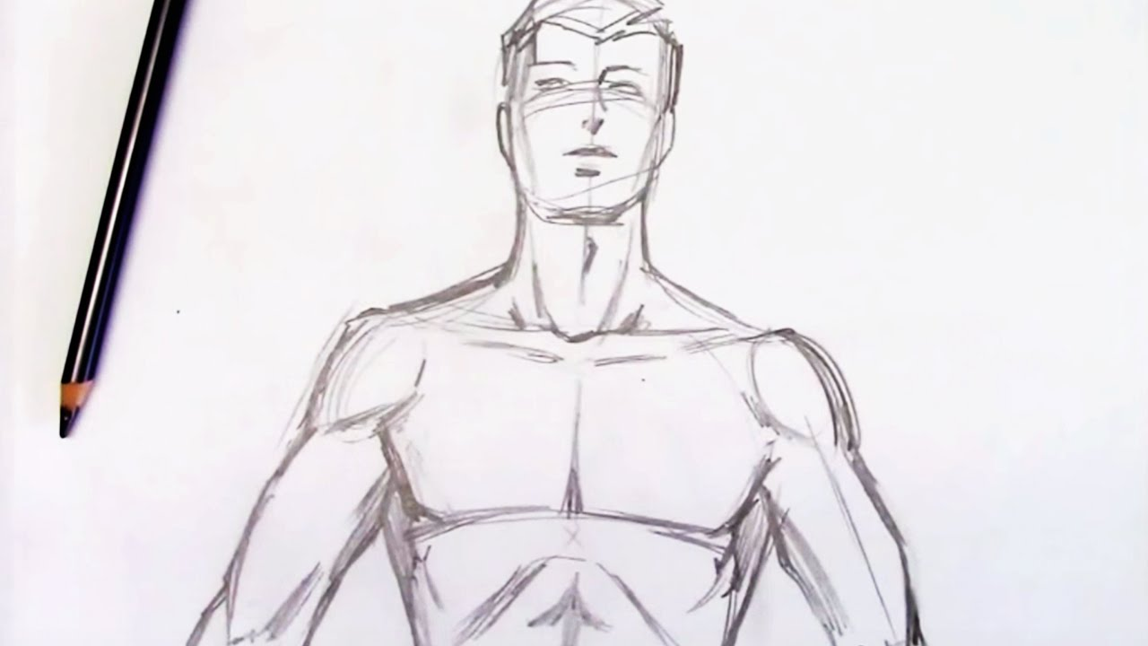 graphic freeuse download How to draw the. Drawing torso.