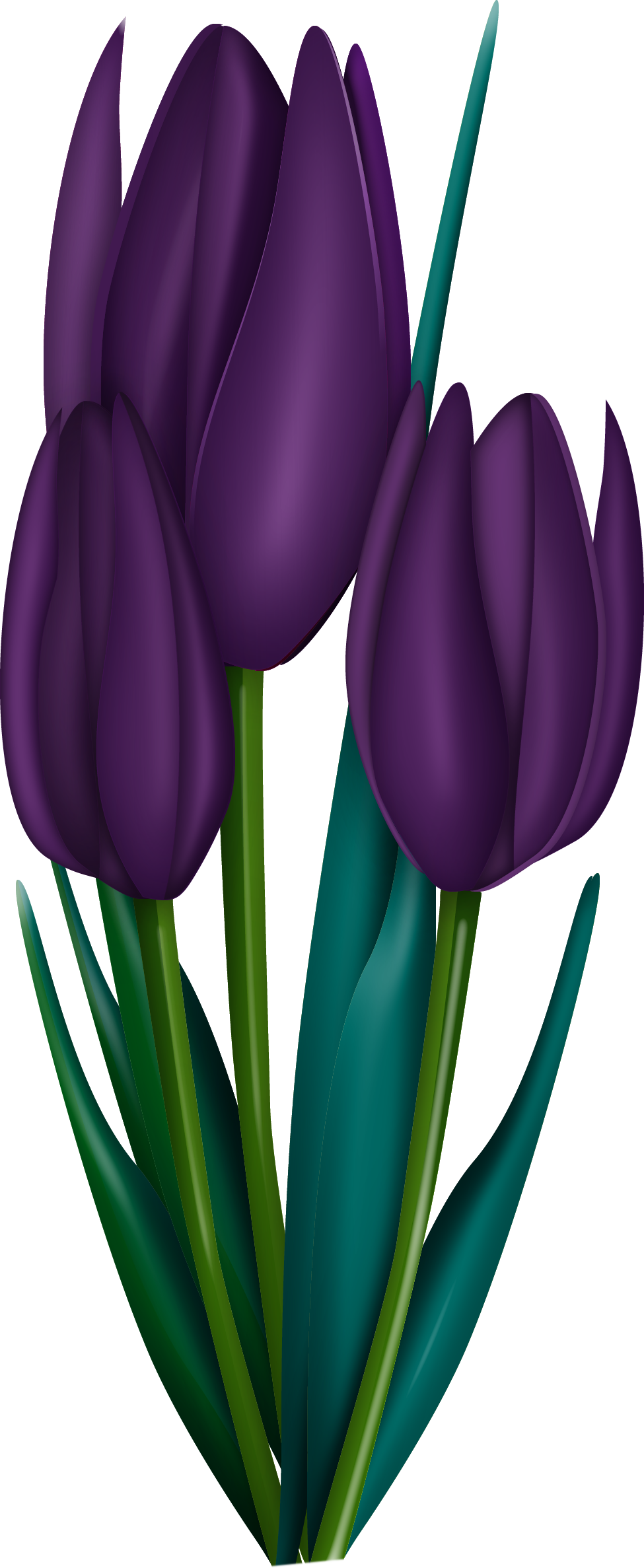 clip download crocus drawing watercolor #111092844