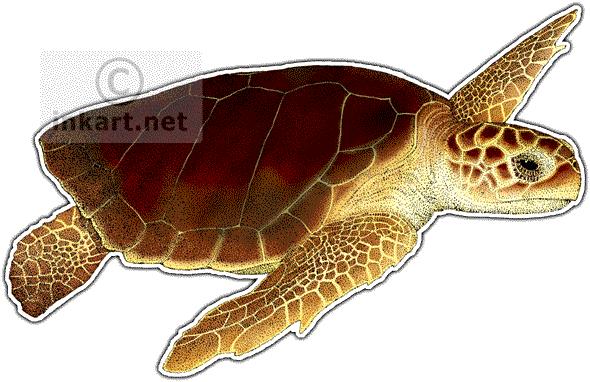 royalty free stock Loggerhead Sea Turtle Drawing at GetDrawings