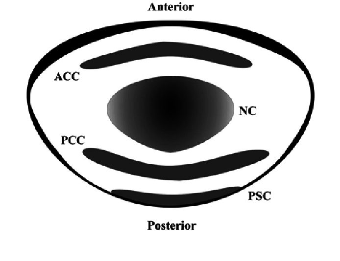 svg transparent Types drawing creative. Schematic of human lens