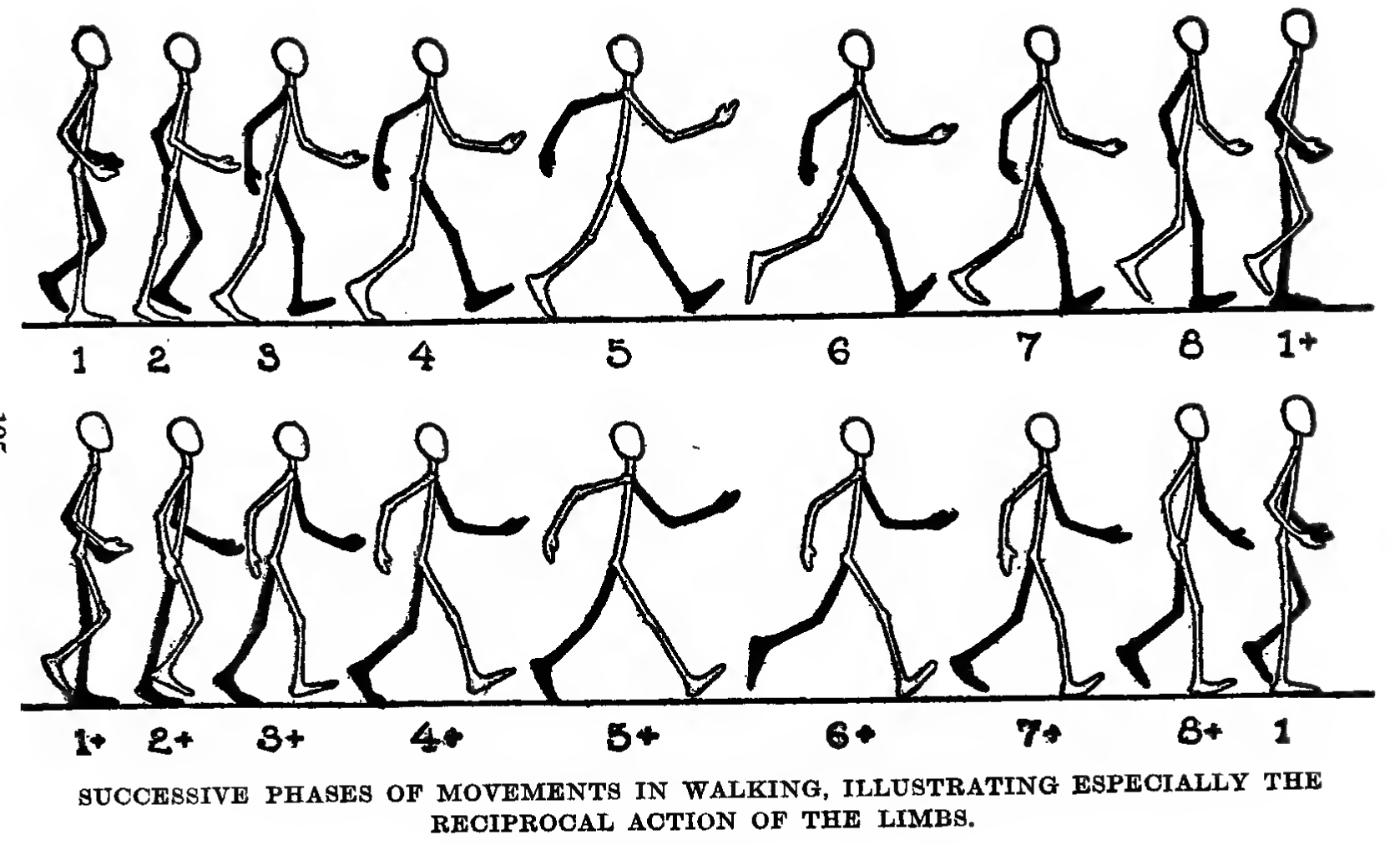 image free library Drawing walking. How to draw and