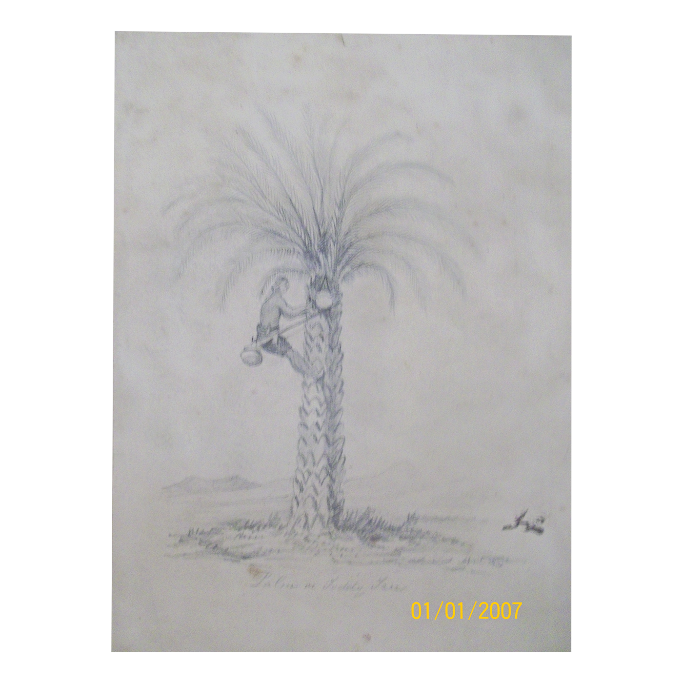 vector library library English School drawing of Palm or Toddy Tree