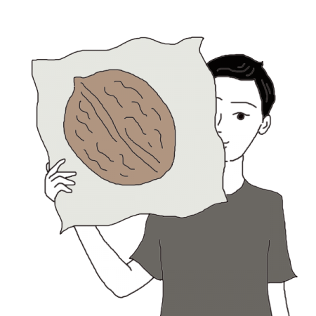 png free Walnuts Dream Dictionary