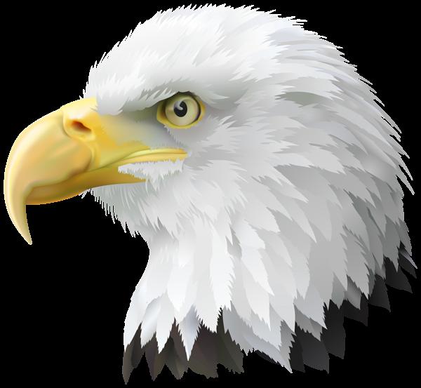 stock Eagle head clipart. American transparent png clip