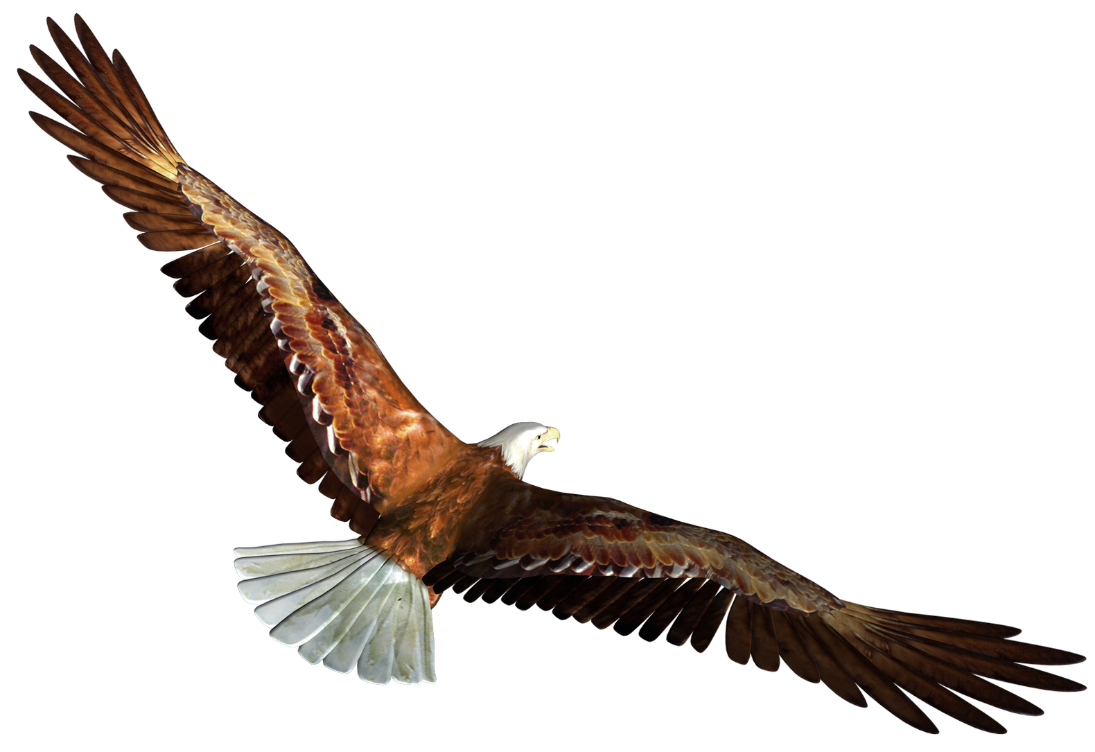 png library library Eagle in flight transparent. Gallery clipart eagel.