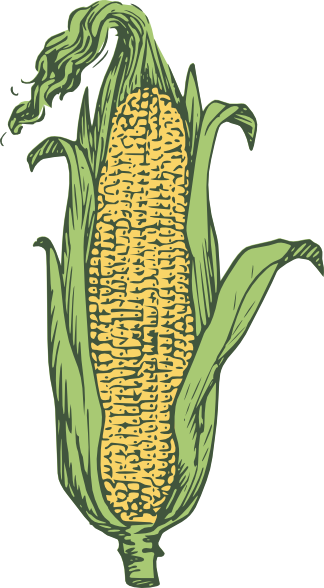 picture library stock Corn Clip Art at Clker