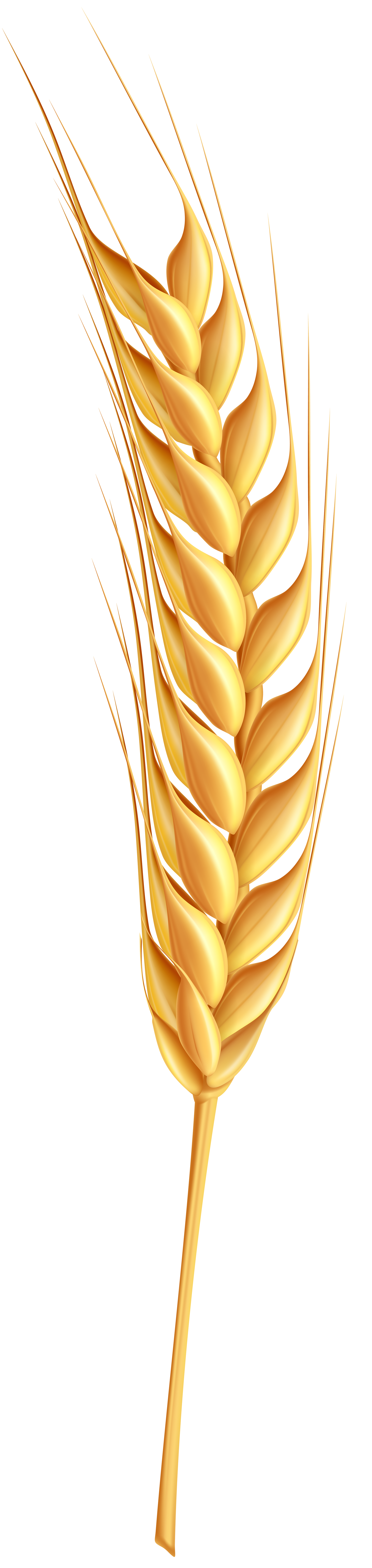 svg download Ear of wheat clipart. Wheatear png clip art