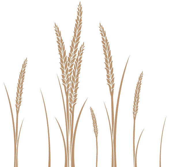 picture royalty free stock Vector art free food. Ear of wheat clipart