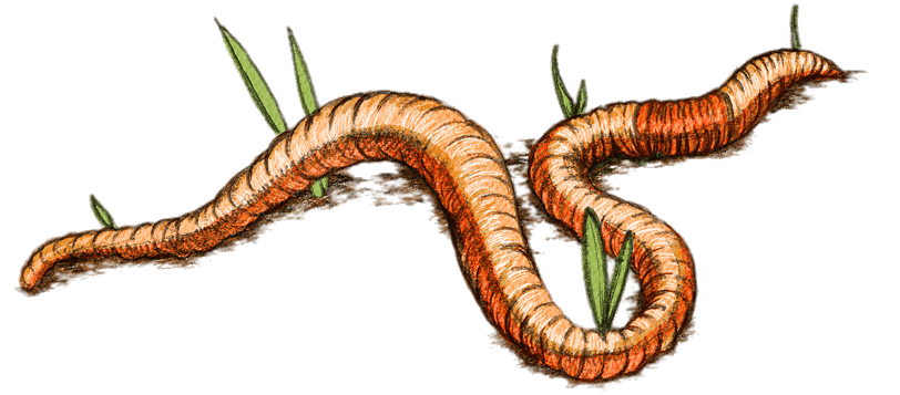 free Earth Worm Drawing transparent PNG