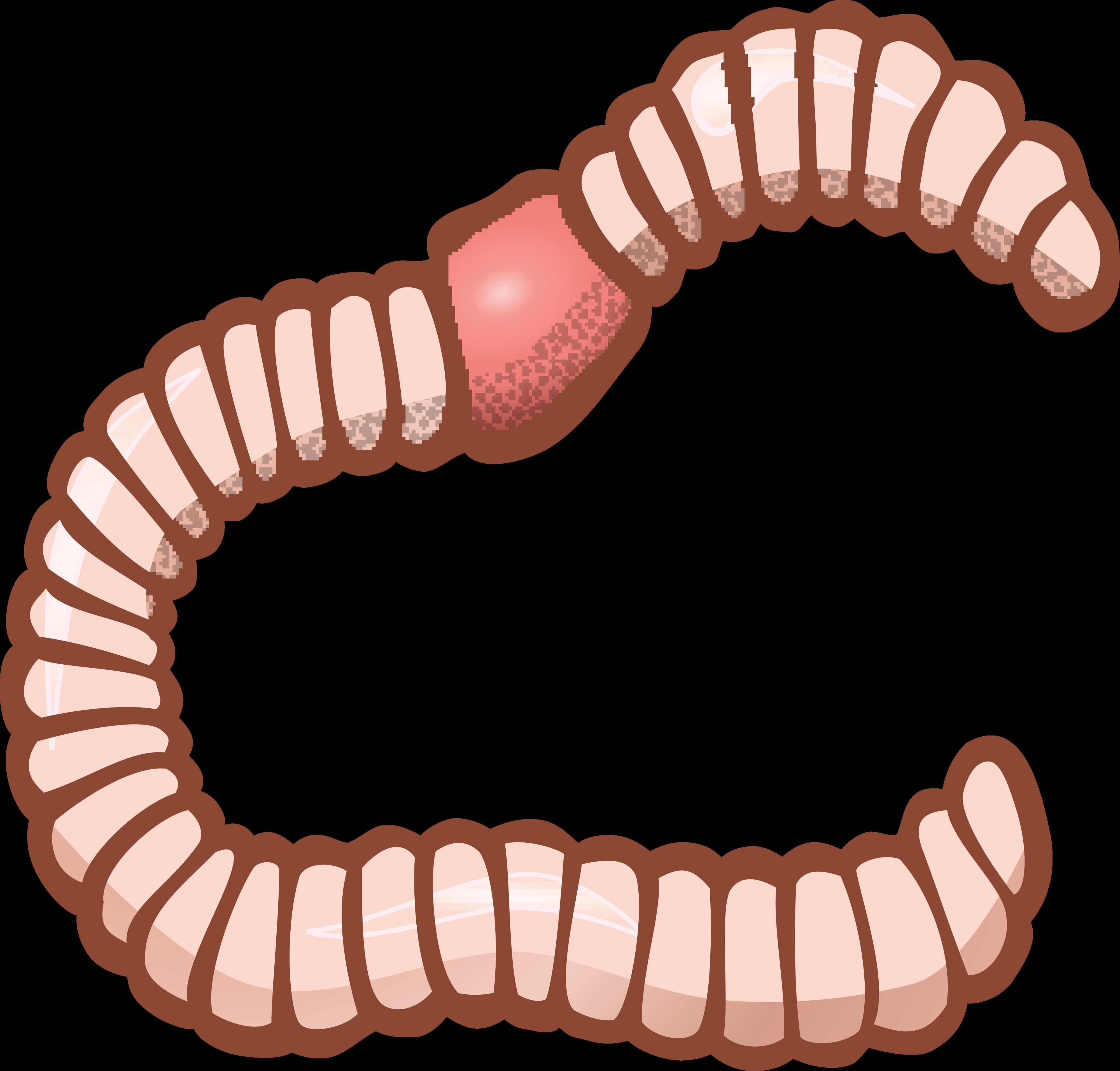 vector royalty free Earthworm Clip art