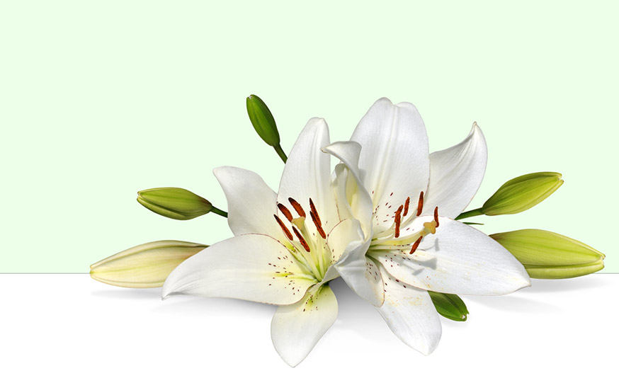 picture Free cliparts download clip. Easter lily clipart