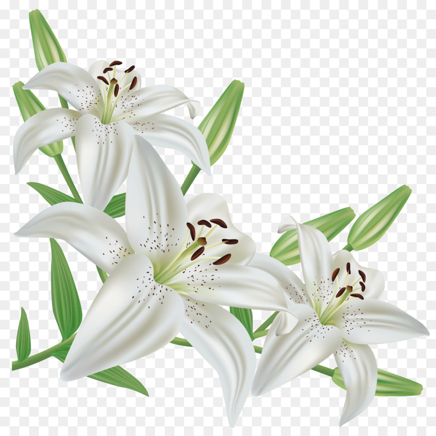 clipart stock Easter lily clipart. White flower transparent clip