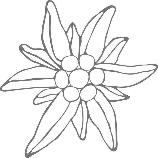 clip free download Edelweiss Drawing at GetDrawings