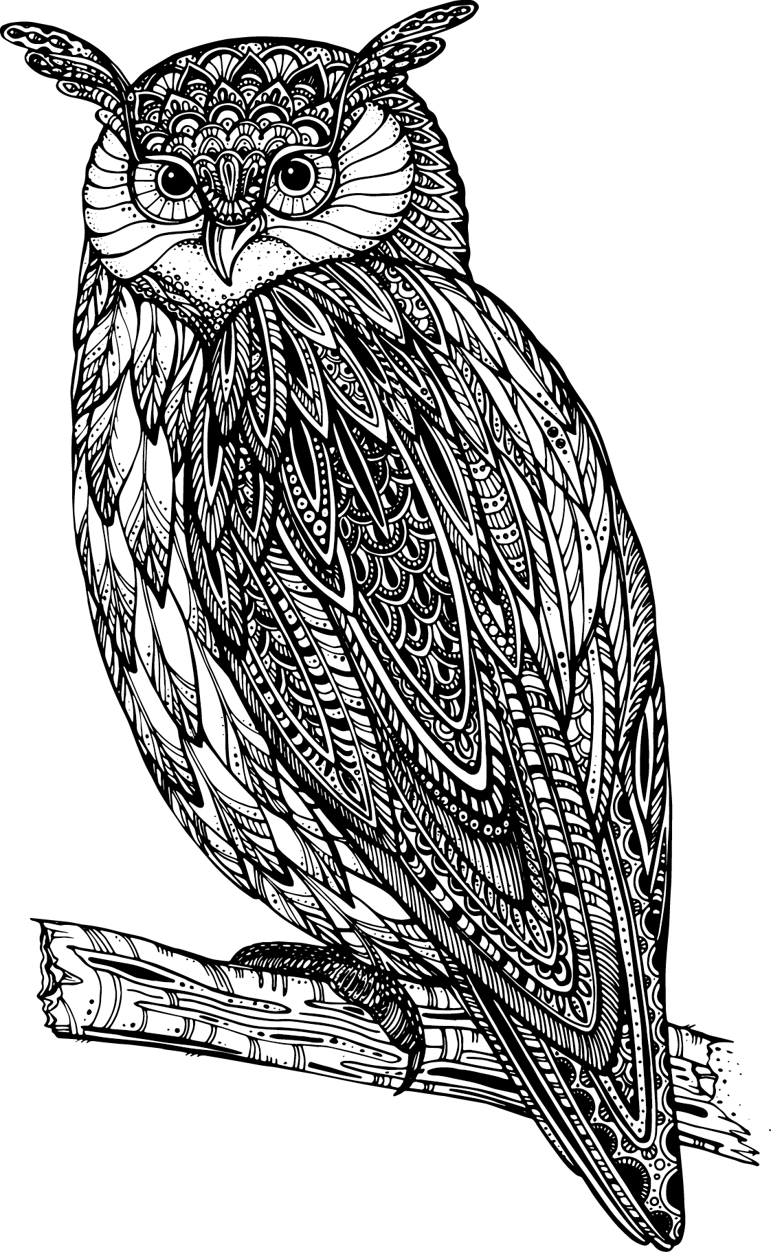 picture black and white stock Owl Drawing Royalty