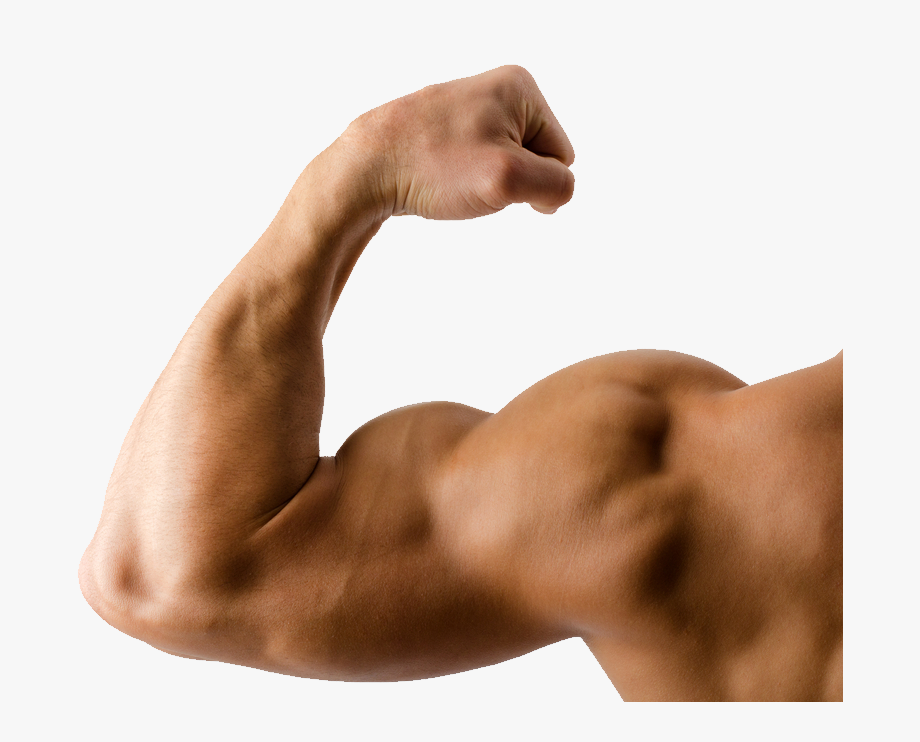 jpg freeuse download Elbow clipart muscle man. Arms transparent