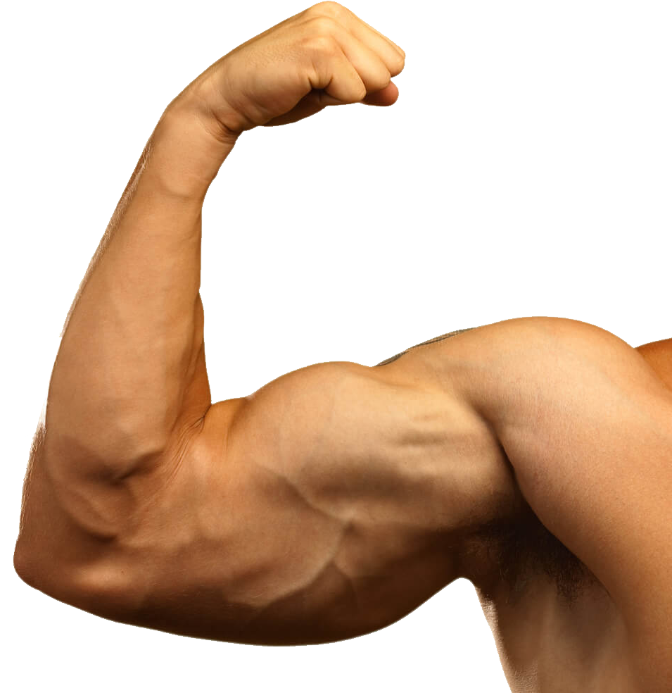 graphic stock Arms transparent. Muscle png image purepng