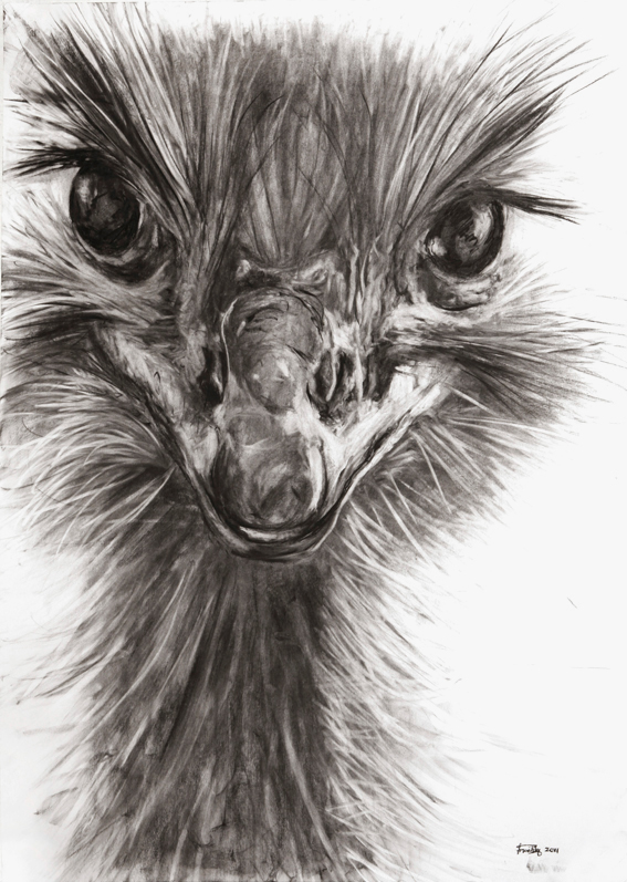 graphic library stock Drawing charcoal animal. Drawings lessons tes teach