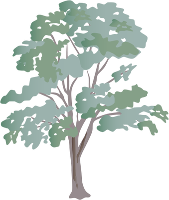 clipart freeuse stock Eucalyptus spp eucalypt illustration. Vector bushes illustrator