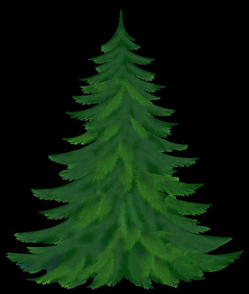 clipart transparent download Transparent Pine Tree PNG Picture
