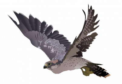 svg transparent library Download Peregrine Falcon PNG Image