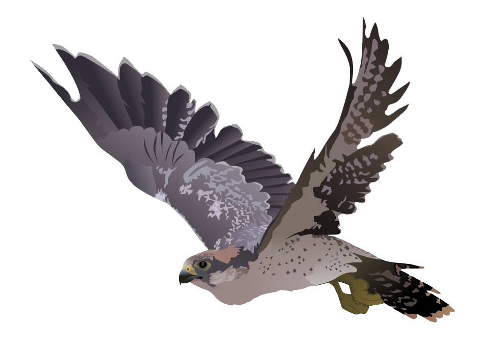 picture library falcon transparent #86928074
