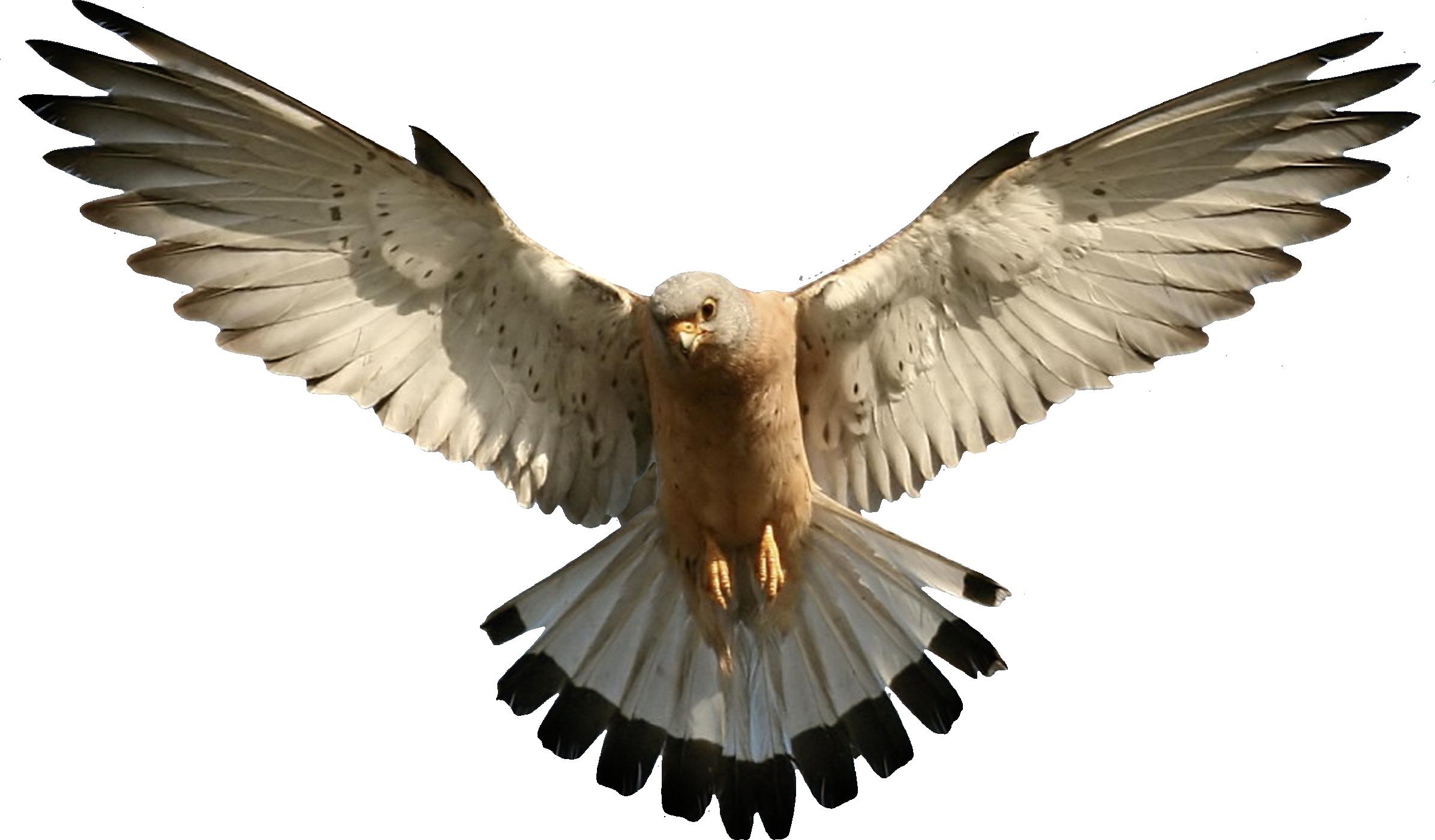clip freeuse download Eagles Fourteen