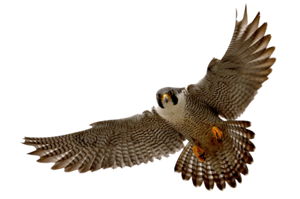 image freeuse library falcon transparent white background #112729144