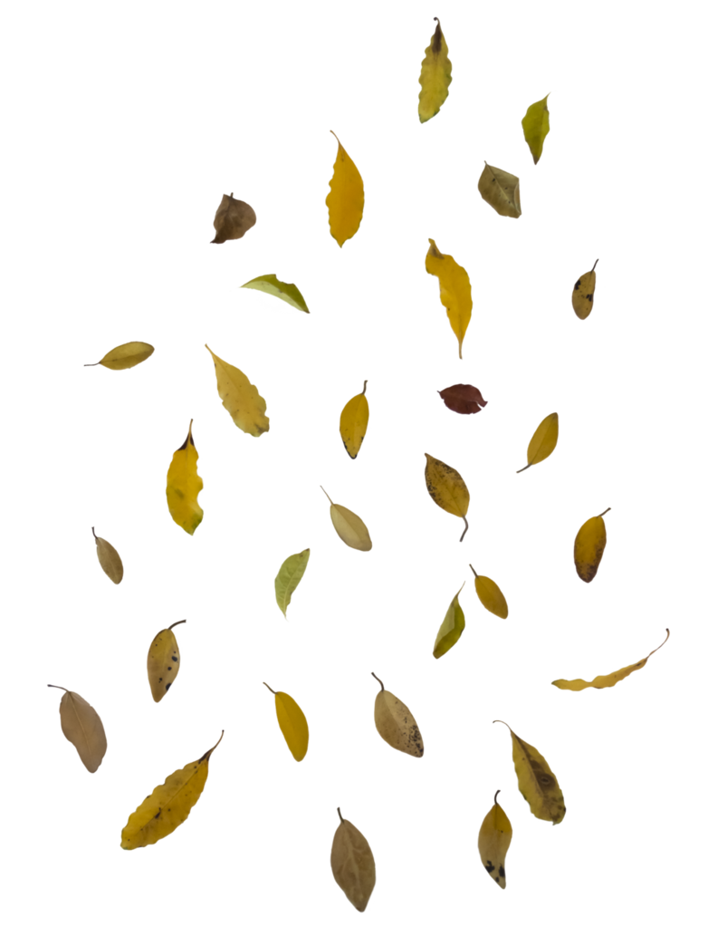 vector library stock Falling leaf overlay