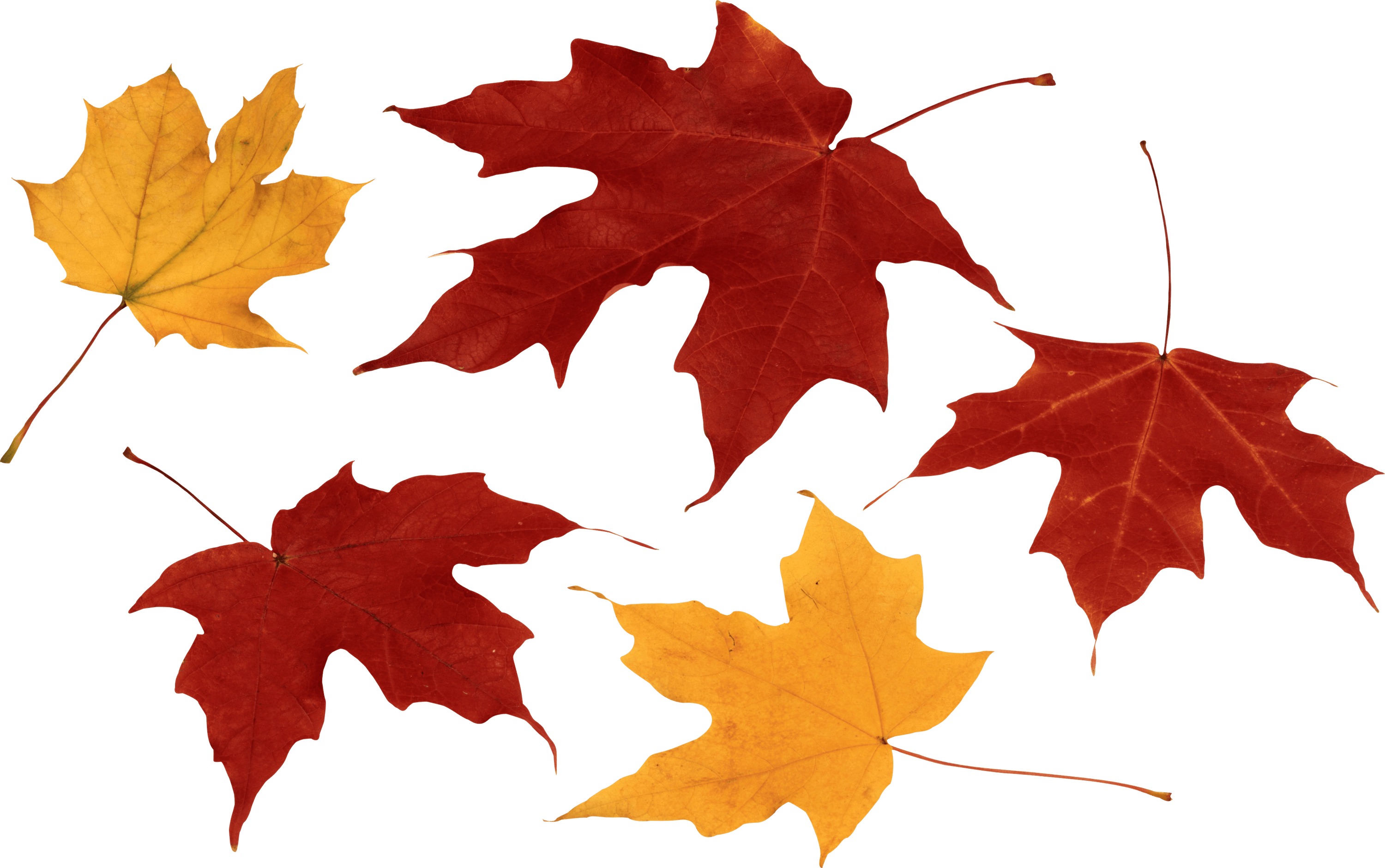 picture free stock Autumn Leaves Group transparent PNG