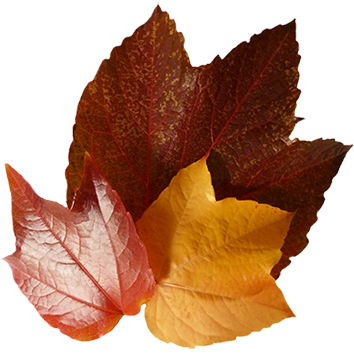 jpg free Fall Leaves Clip Art