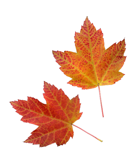 vector download Fall transparent tumblr.  png for free