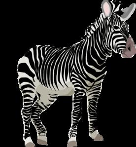 image library At clker com vector. Zebra clipart clip art