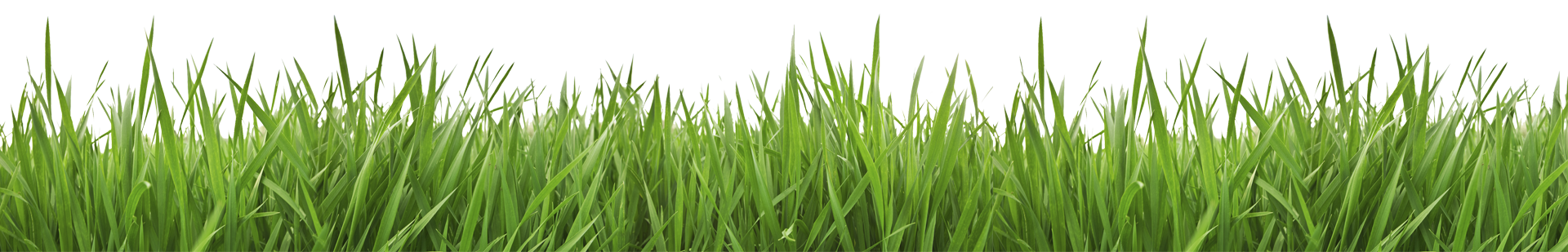 jpg royalty free download Lawn Clipart grass line