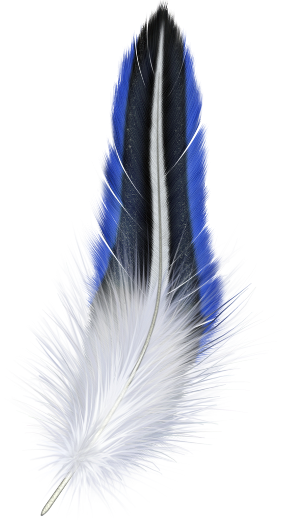 banner free library Blue and white . Feather clipart