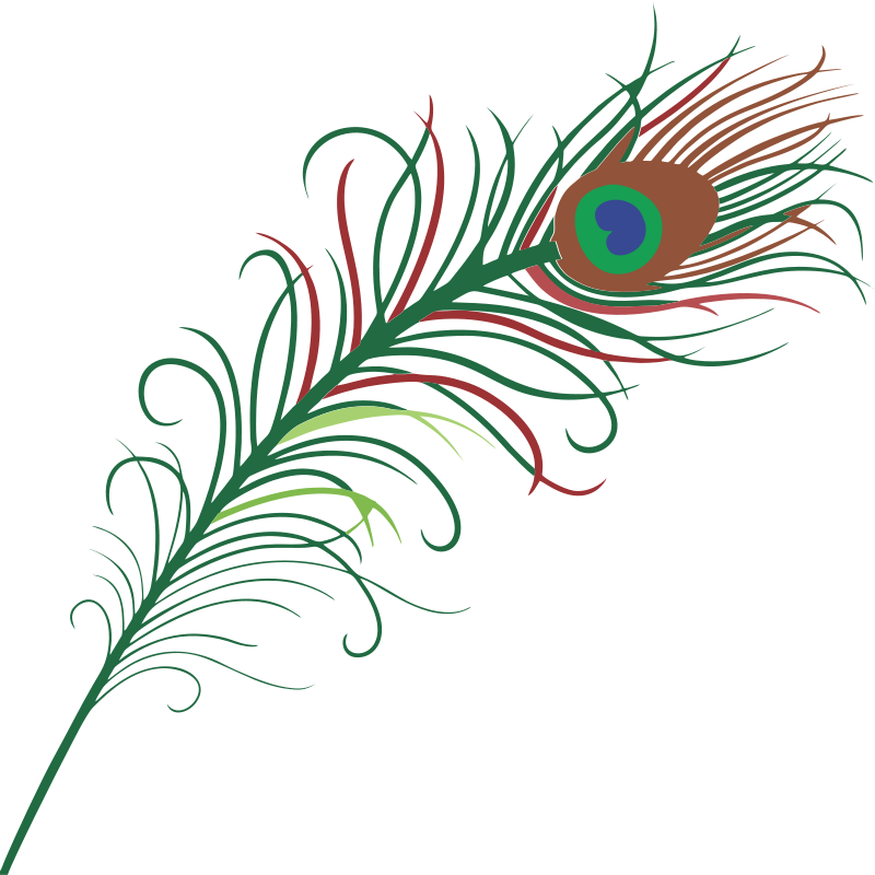 vector This peacock feather clip art