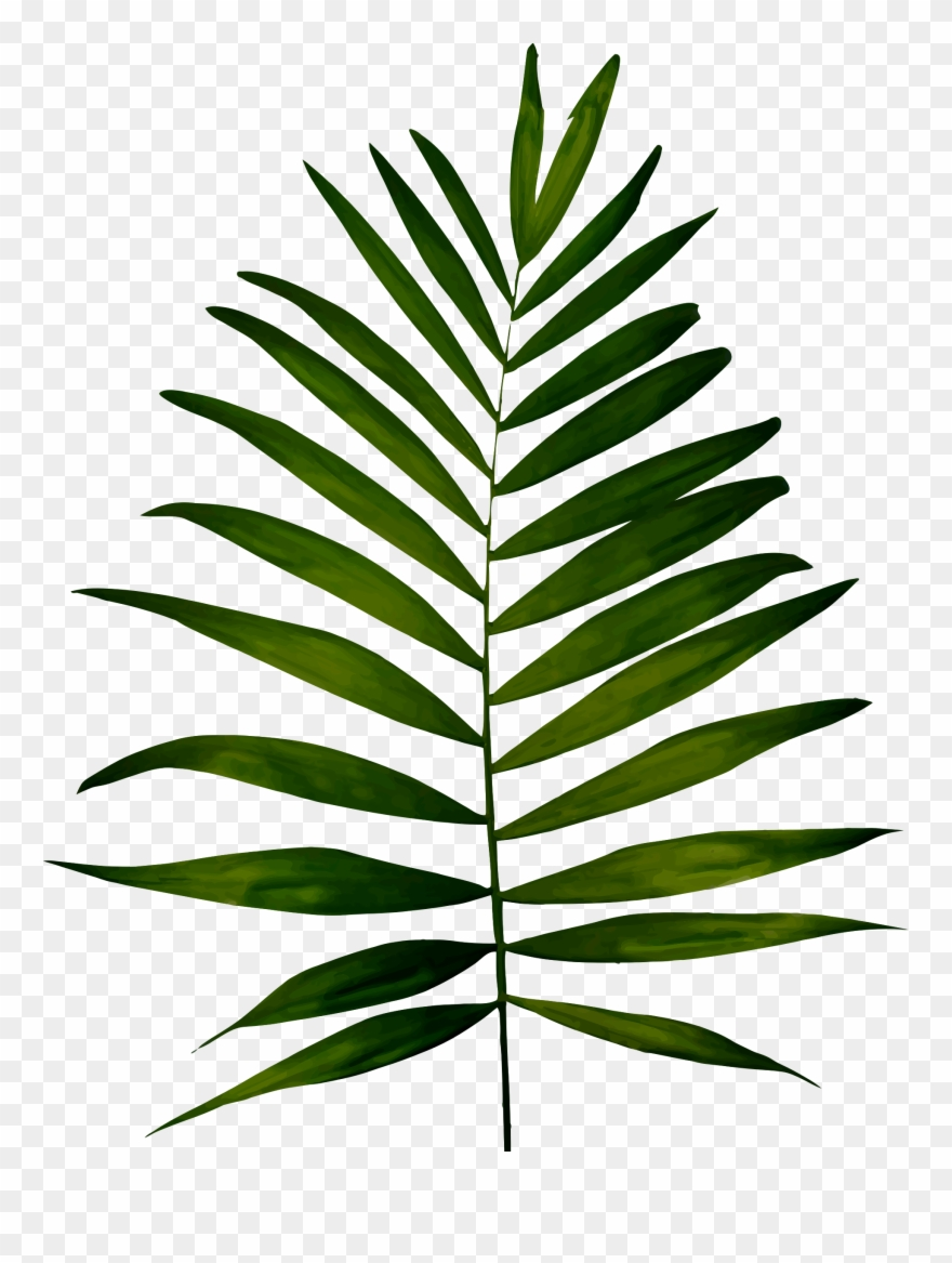 clipart black and white download Fern clipart. Big image images clip
