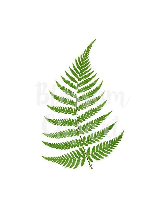clipart black and white stock Leaf vintage leaves digital. Fern clipart.