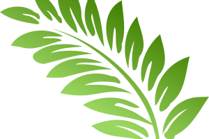clipart stock Transparent background free on. Fern clipart.
